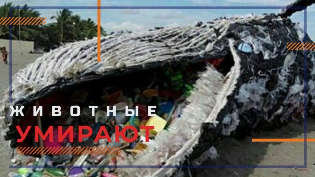plastik ubivaet zhivotnih